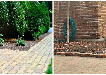 examples of mulch in border block