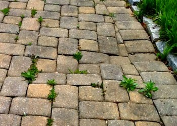 damaged patio pavers overgrown with weeds