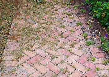 Weeds in my pavers… where do they come from?