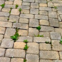 Cleaning & Sealing Pavers